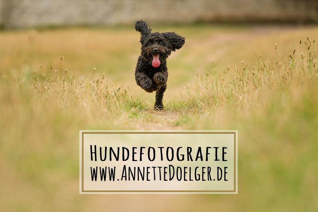 Braunschweig-Fotograf-Hundefotografie