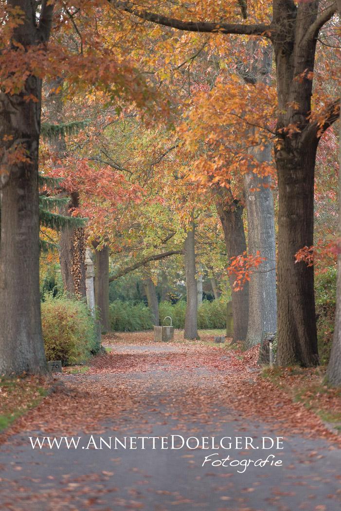 Alter Baumbestand auf dem Braunschweiger Hauptfriedhof
