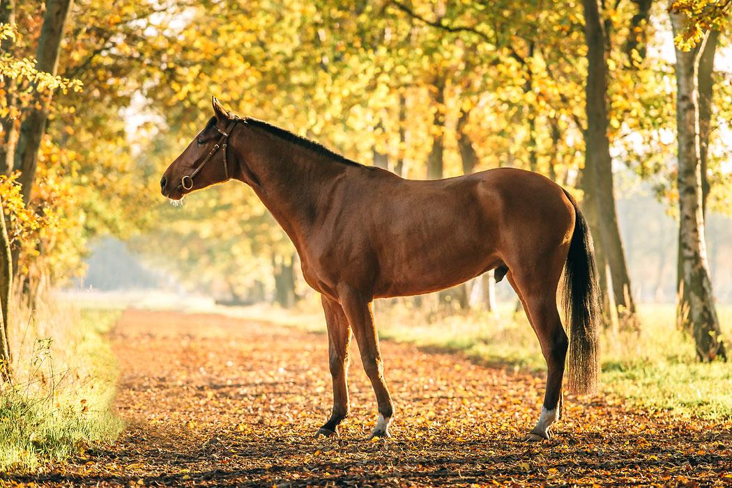 Braunschweig-Pferdefotograf-Herbst