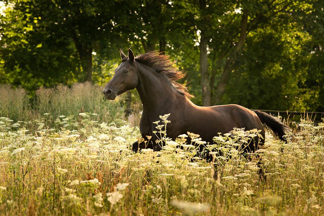 Braunschweig-Pferdefotografie-2