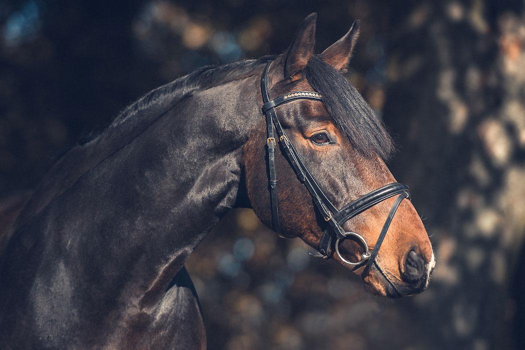 Braunschweig Pferdefotografin Kopfportrait