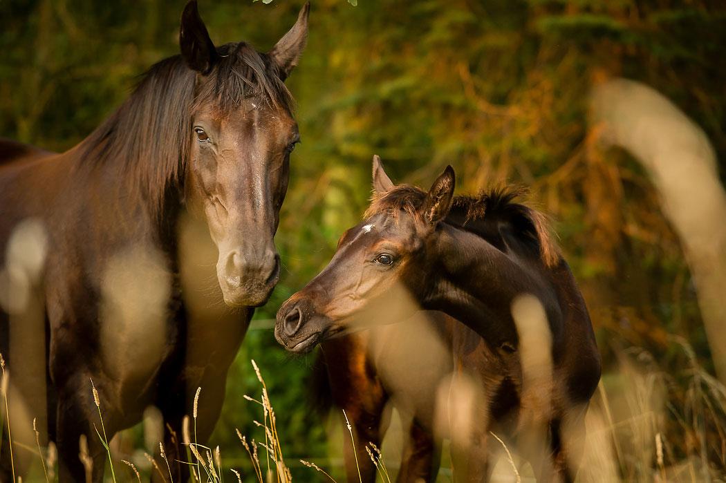 Braunschweig-Tierfotografie-Pferd-3