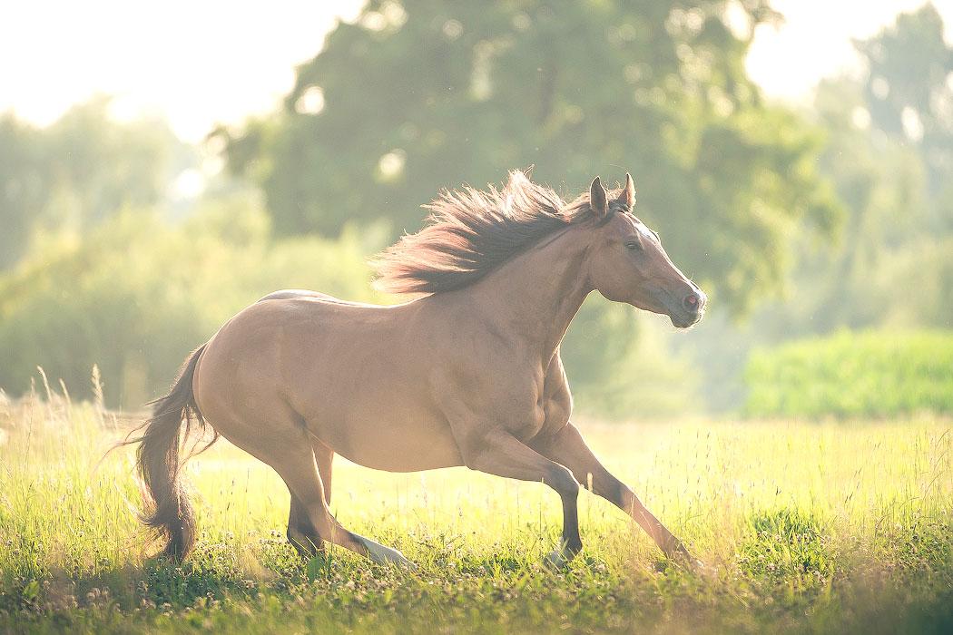 Braunschweig-Tierfotografie-Pferd-Wiese