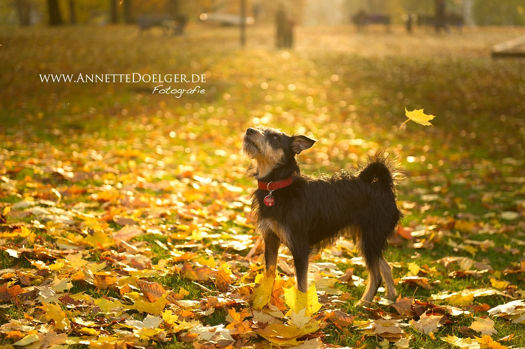 Braunschweig_Fotograf_Hund-1