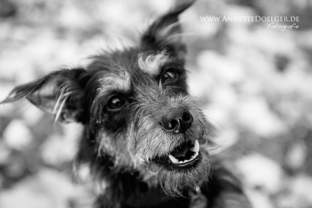 Braunschweig_Fotograf_Hund