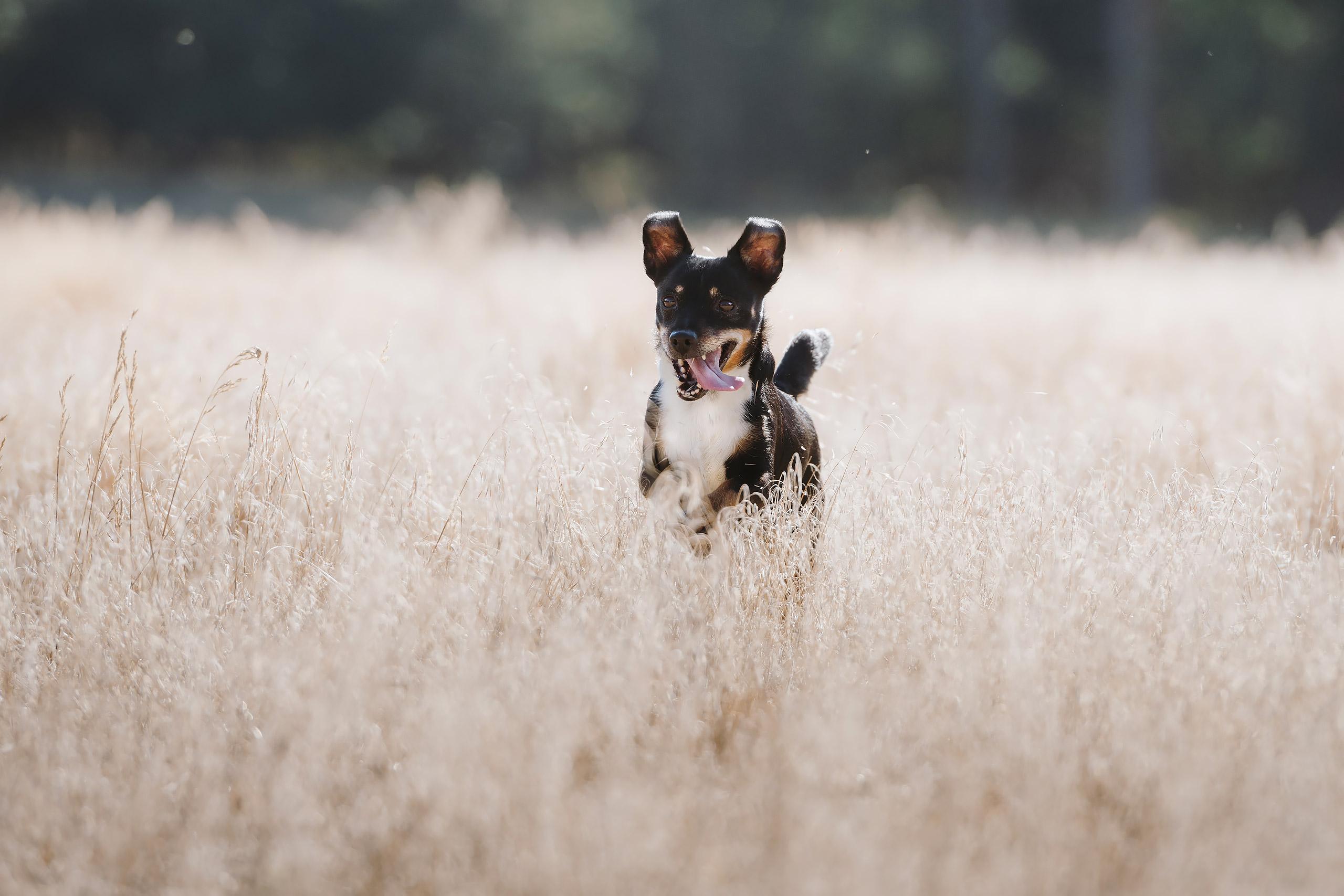 Familienfotografie-Gifhorn-Hund