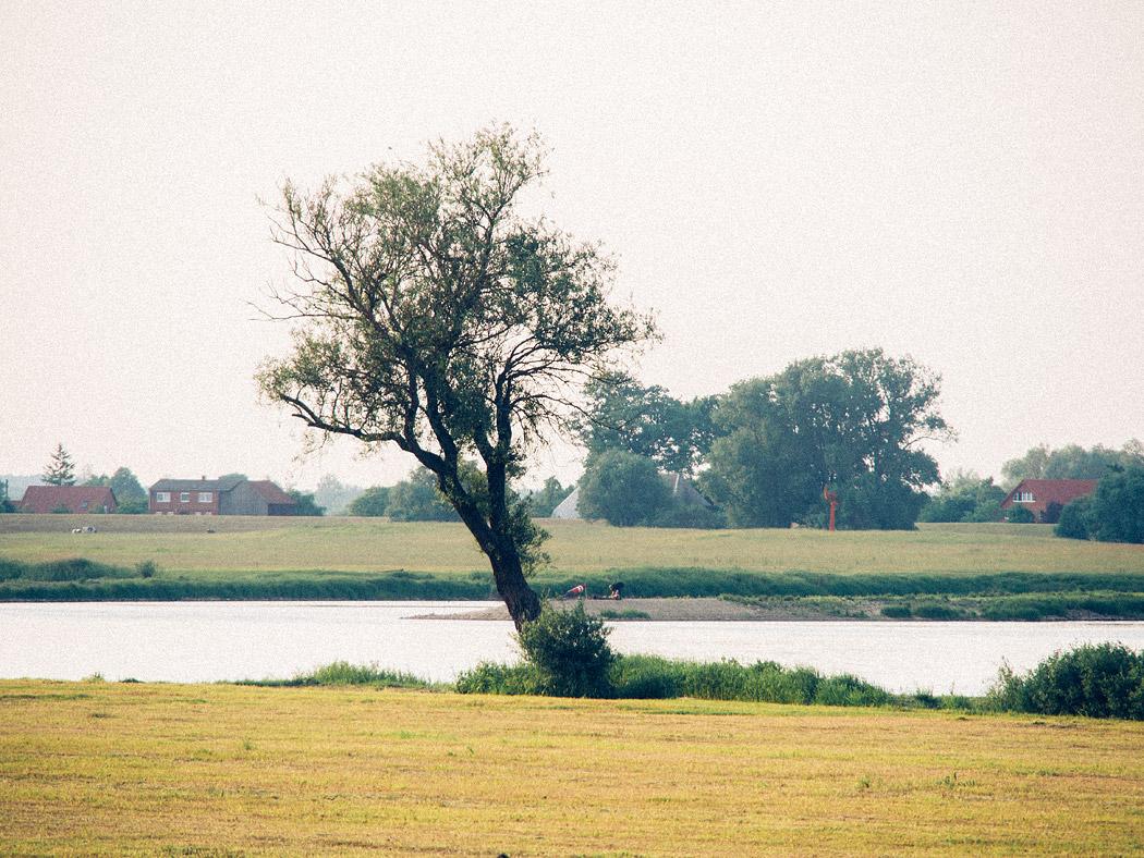 Baum am Elbufer bei Hitzacker