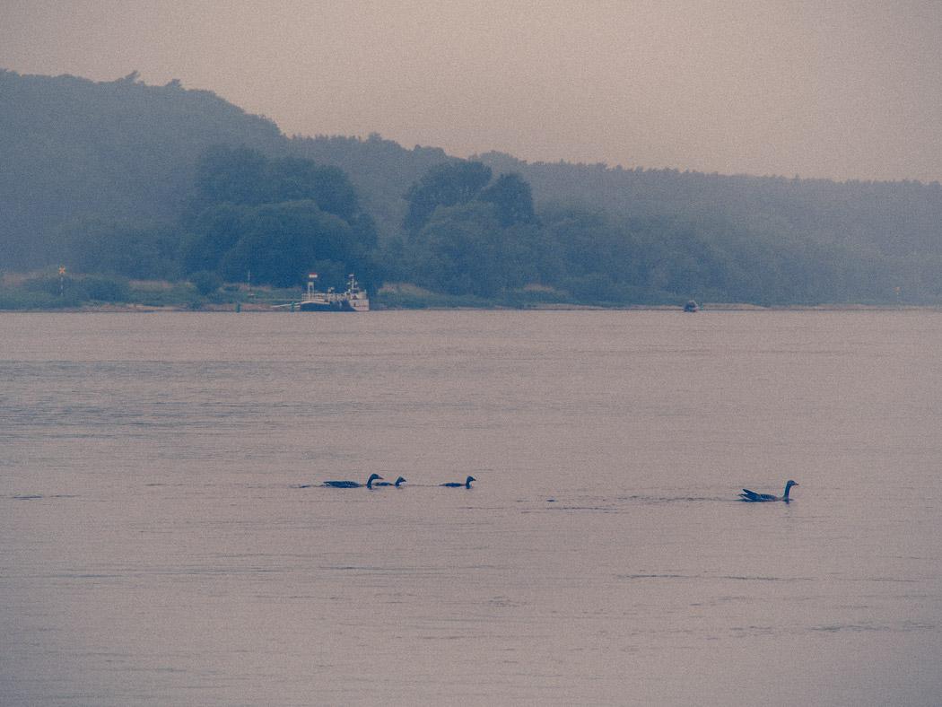 Morgenstimmung auf der Elbe bei Hitzacker