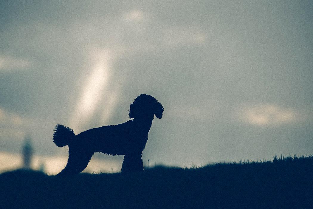 Fotograf-Braunschweig-Hunde