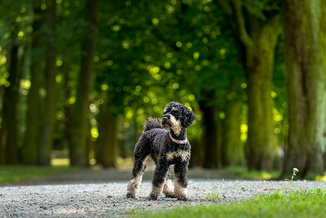 Fotograf-Braunschweig-Hundefotografie