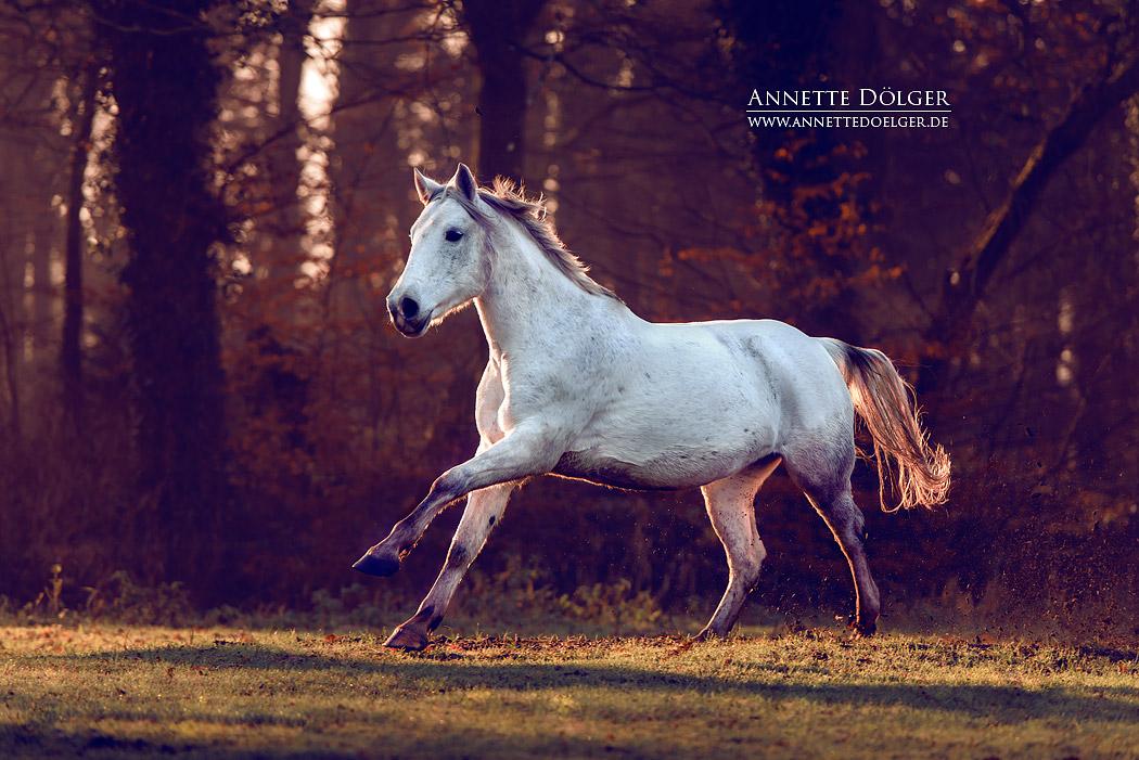 fotograf-braunschweig-pferdefotografie-2