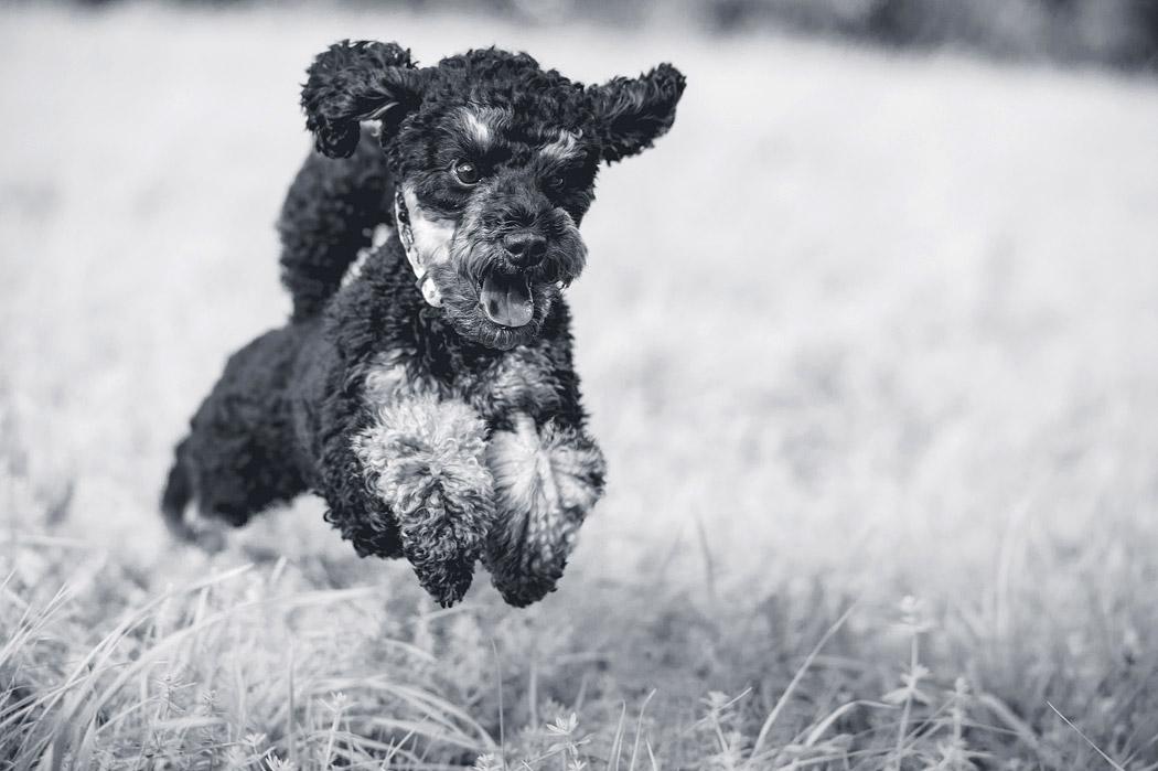 Fotograf-Braunschweig-Tierfotografie-Hund