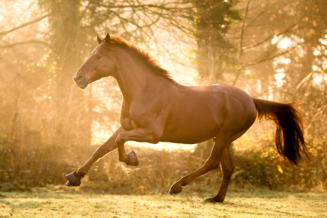 Helmstedt-Fotograf-Pferd-2