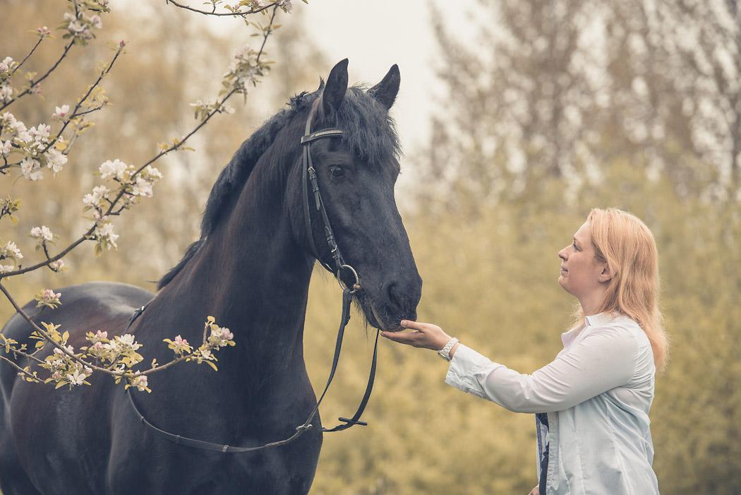 Helmstedt-Fotograf-Pferd