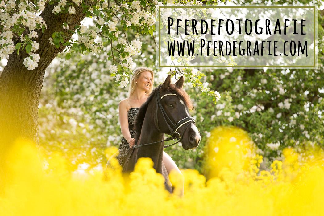Helmstedt-Pferdefotografie