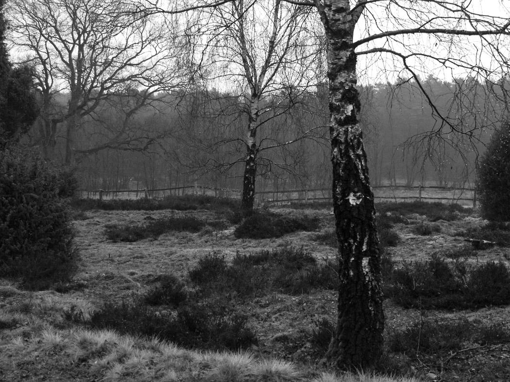 Lueneburger-Heide-Wilseder-Berg-Birke-Landschaft-Annette-Doelger