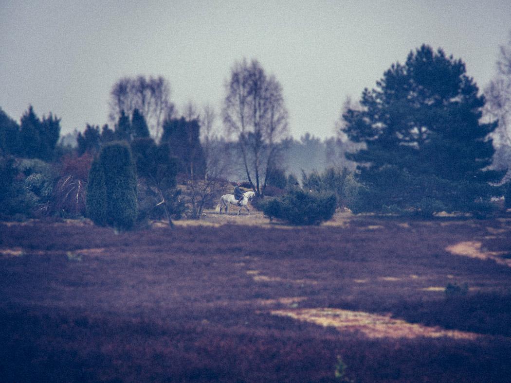 Lueneburger-Heide-Wilseder-Berg-Pferd-Landschaft-Annette-Doelger