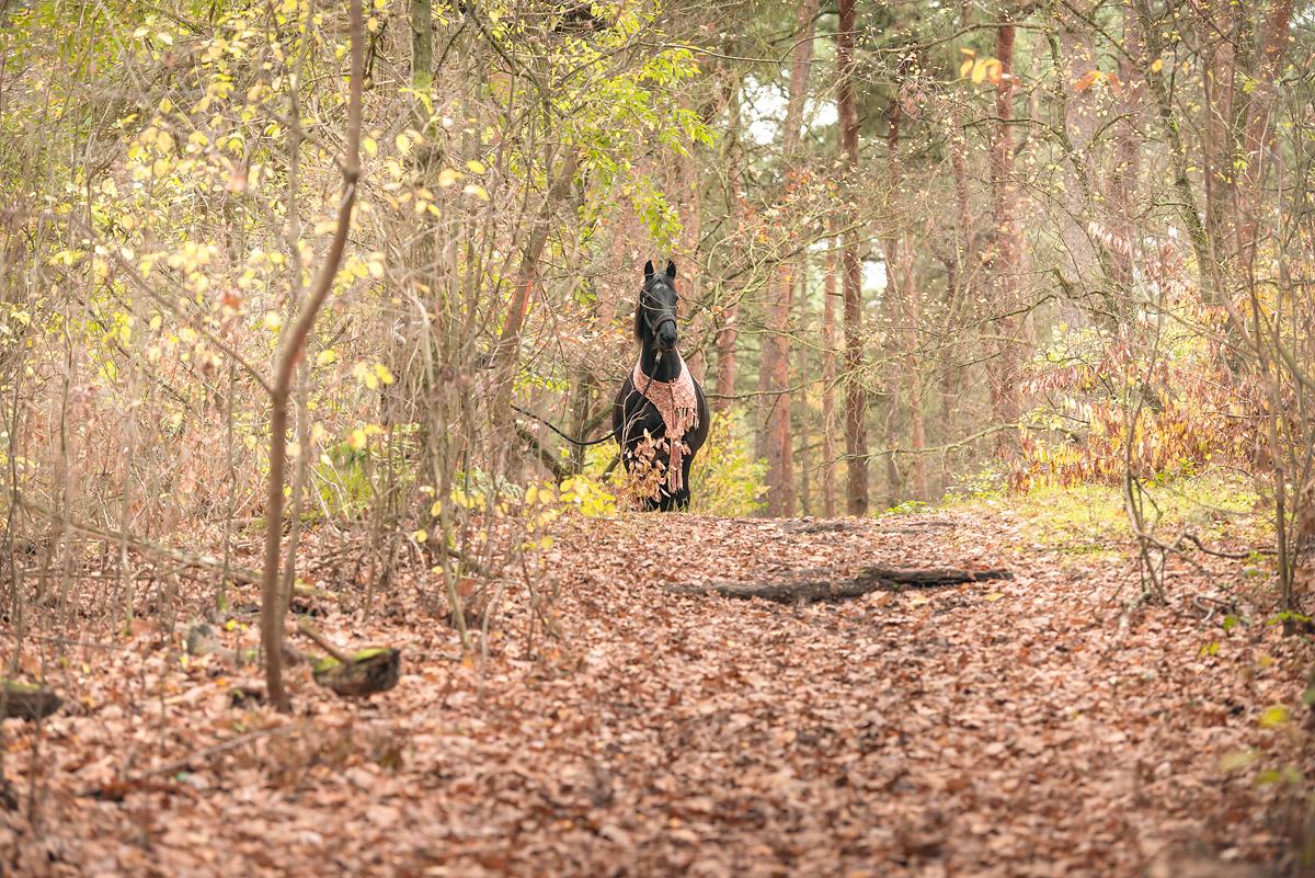 Pferdefotografie-11