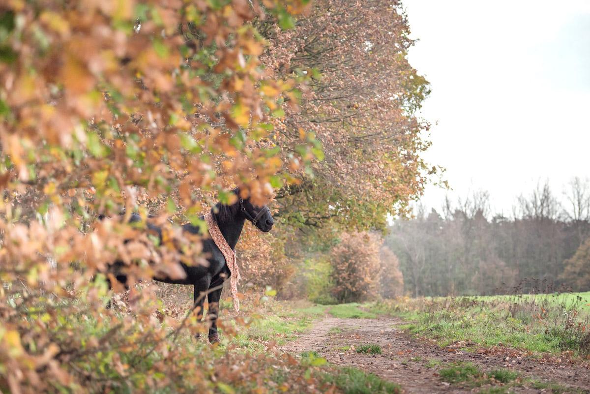 Pferdefotografie-13