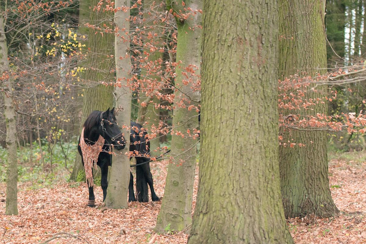 Pferdefotografie-15