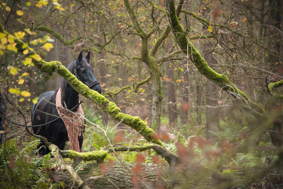 Pferdefotografie-2
