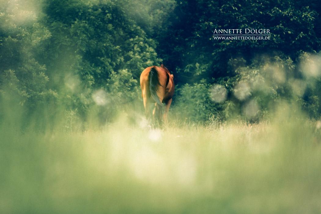 pferdefotografie-braunschweig-annette-doelger-10