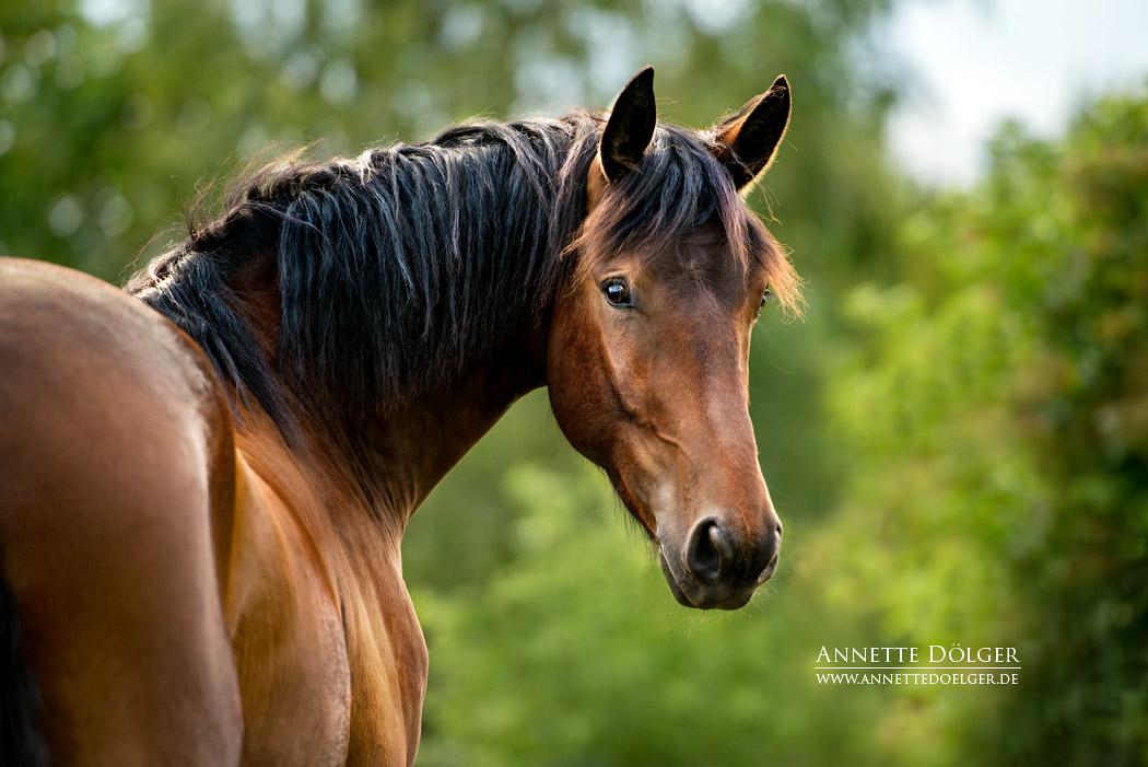 pferdefotografie-braunschweig-annette-doelger-11