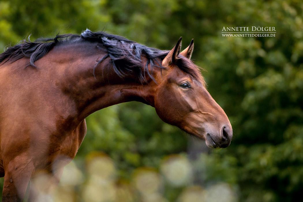 pferdefotografie-braunschweig-annette-doelger-12