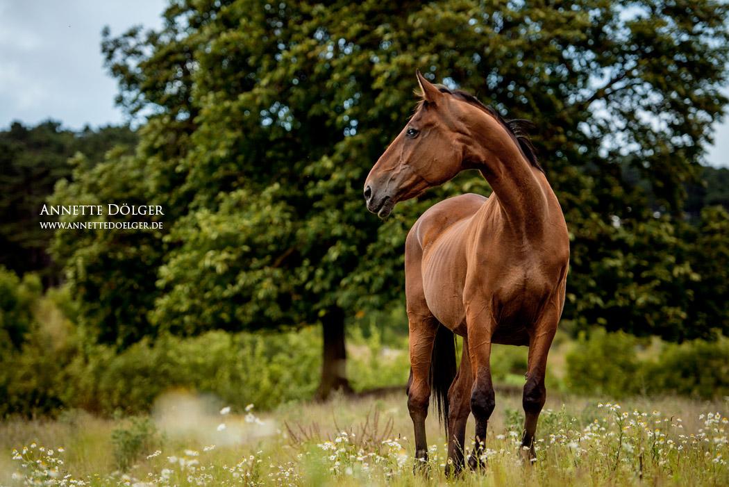 pferdefotografie-braunschweig-annette-doelger-4