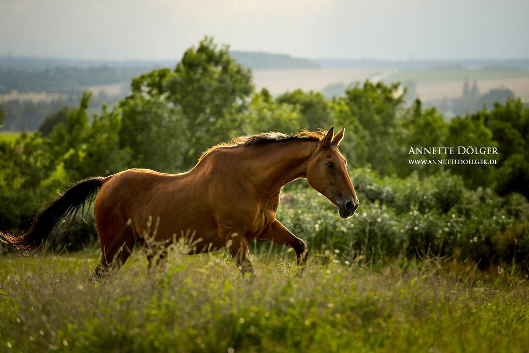pferdefotografie-braunschweig-annette-doelger-5