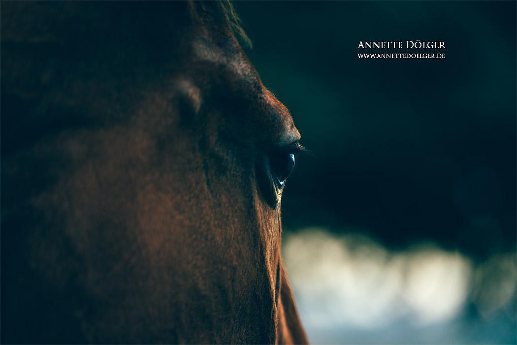 pferdefotografie-braunschweig-annette-doelger-7
