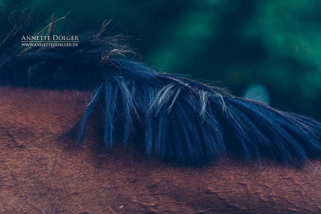 pferdefotografie-braunschweig-annette-doelger-8