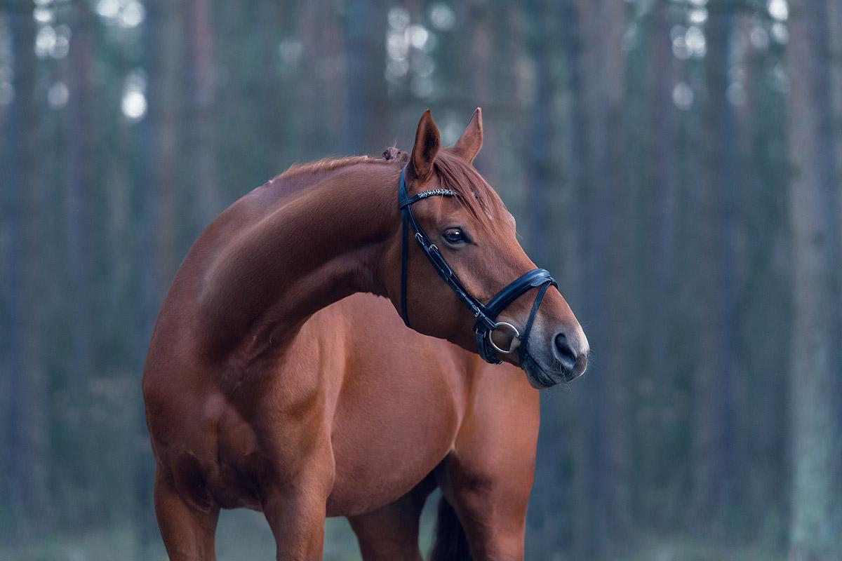 Pferdefotografie-Gifhorn-Braunschweig