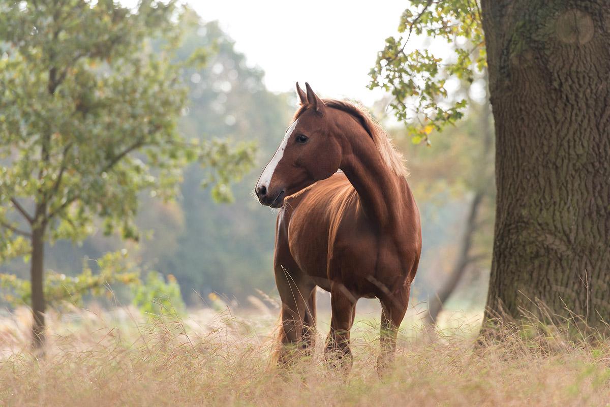 Pferdefotografie-Wiese