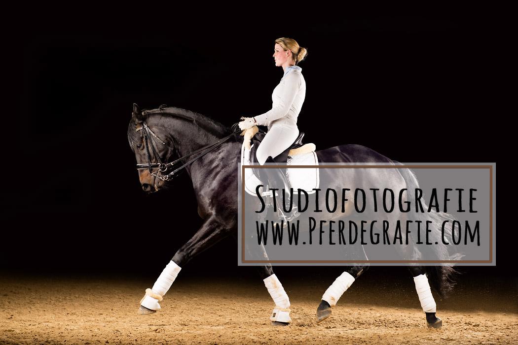 Pferdefotostudio-Braunschweig