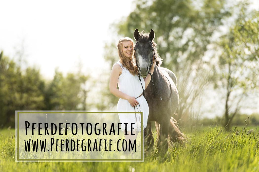 Wolfenbuettel-Pferdefotografie