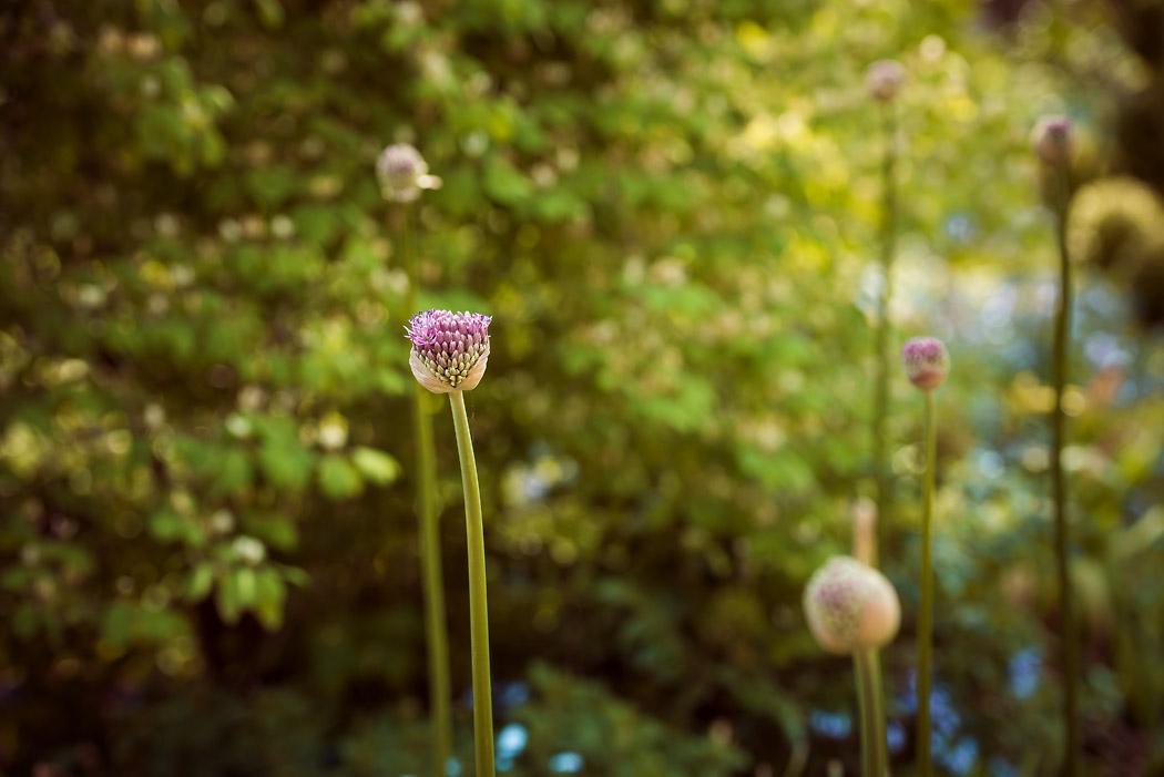 Wolfsburg-Fotografin-Garten